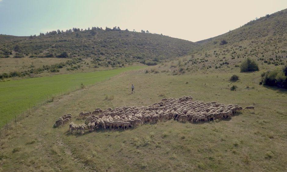 TRICOLOR, un parcours au coeur des filières de laines françaises